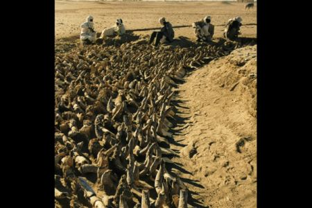 11. Clearing of bucrania in front of a Middle Kerma tomb .jpg